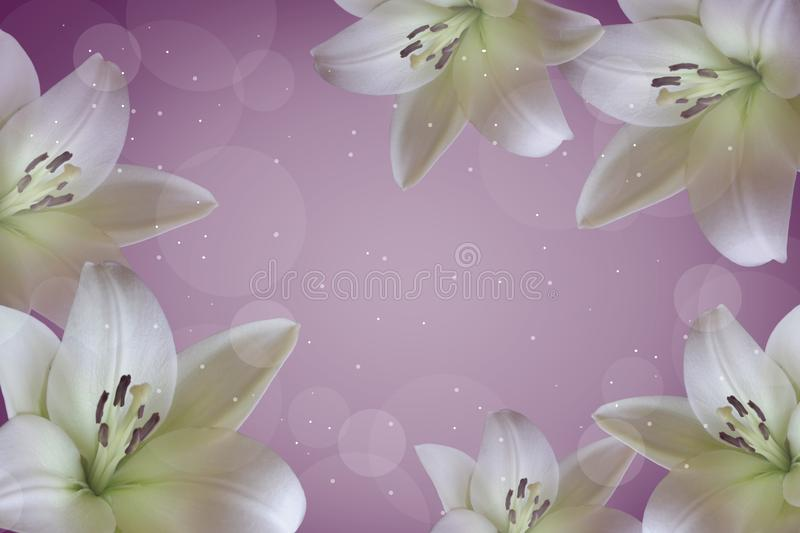 Postcard with white lilies. White lilies on a purple background royalty free stock photos