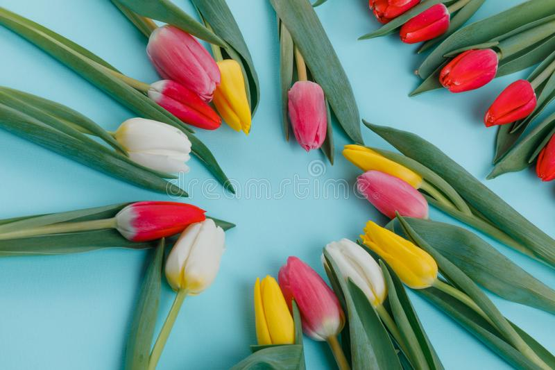 Spring tulips frame on background, top view. Postcard for Women`s Day. royalty free stock photos