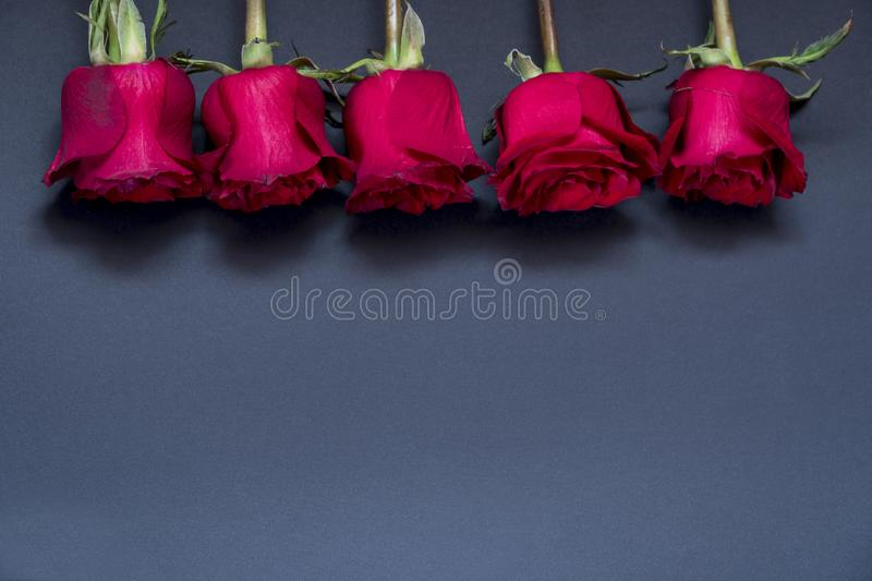 Postcards. roses are red. five Valentine`s Day Roses flowers. stock photos