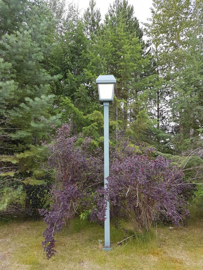 Poste de la lámpara en arbustos imagen de archivo