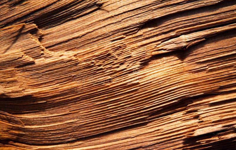 Postenzeilen hackten Holz lizenzfreies stockbild