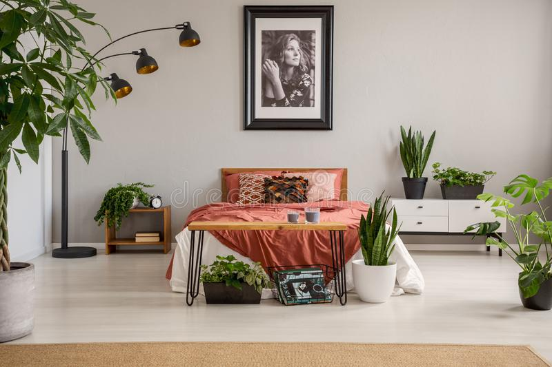 Poster above red bed with blanket in grey bedroom interior with plants and carpet. Real photo stock photography
