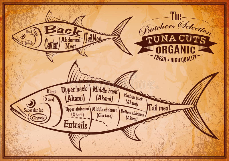 Poster with a detailed diagram of butchering tuna. Retro poster with a detailed diagram of butchering tuna vector illustration