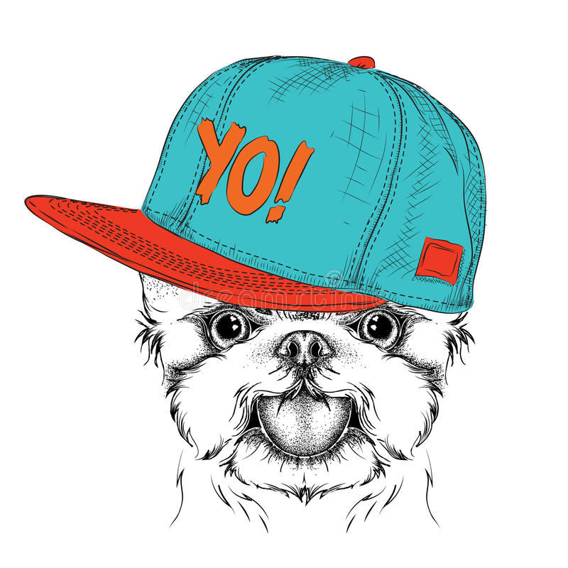 The poster with the image dog portrait in hip-hop hat. Yorkshire Terrier. Vector illustration. The poster with the image dog portrait in hip-hop hat. Yorkshire stock illustration