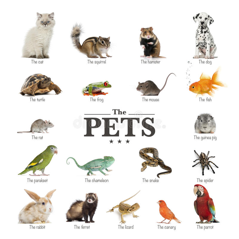 Poster of pets in English. Isolated on white