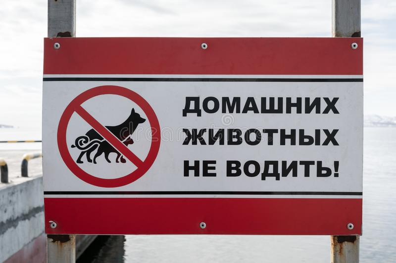 Poster in Russian: Do not drive pets!. Poster on rookery Northern Sea Lion or Steller Sea Lion Eumetopias Jubatus on coast of Pacific Ocean, inscription in stock photo