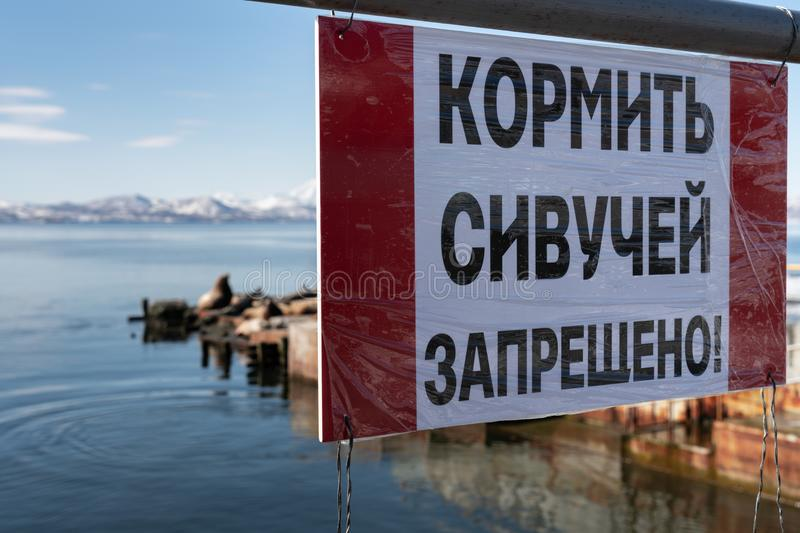 Poster in Russian: It is forbidden to feed Stellers sea lions!. Poster on rookery Northern Sea Lion or Steller Sea Lion Eumetopias Jubatus on coast of Pacific royalty free stock image