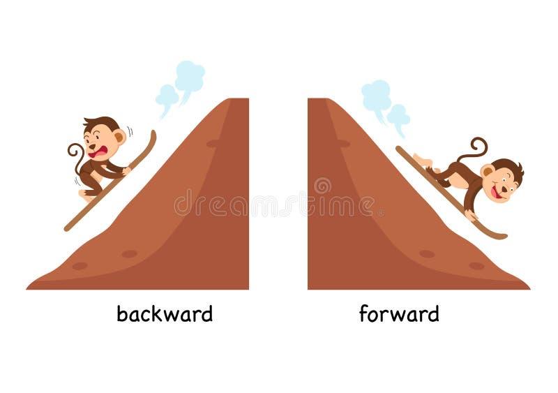 Posterior y delantero opuestos libre illustration