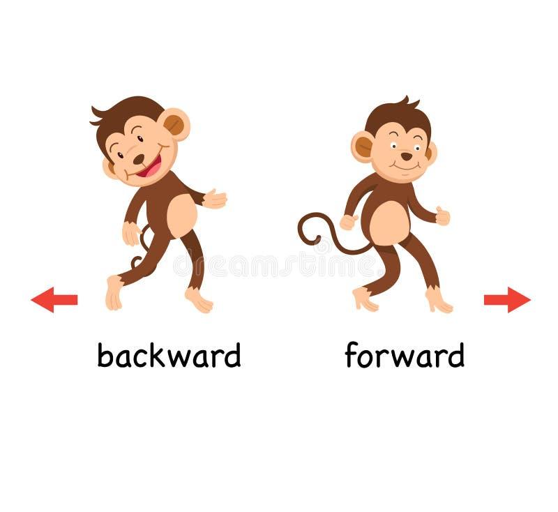 Posterior y delantero opuestos ilustración del vector