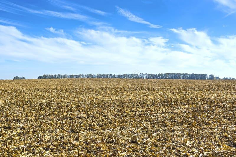 Postharvest residu's van graan op het gebied alvorens wordt verwerkt in de grond zoals organisch royalty-vrije stock fotografie