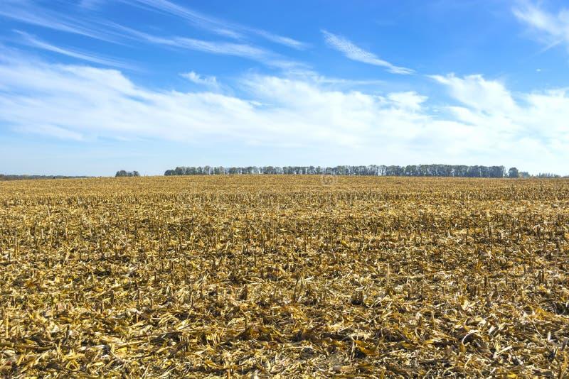 Postharvest residu's van graan op het gebied alvorens wordt verwerkt in de grond zoals organisch royalty-vrije stock afbeeldingen