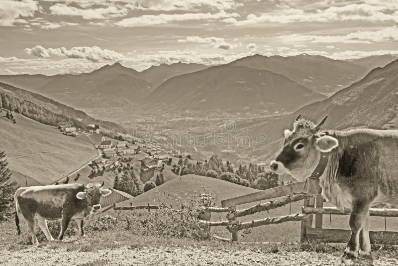 Postkarte des Bergdorfes Prenn in den Sarntal-Alpen mit Kühen im Vordergrund im Weinleseblick lizenzfreies stockbild