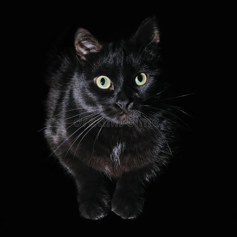 Postkarte für Halloween: Porträt einer schwarzen Katze stockbild
