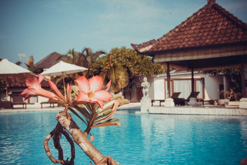 Postkarte mit schönem Bali-Pool lizenzfreie stockfotografie