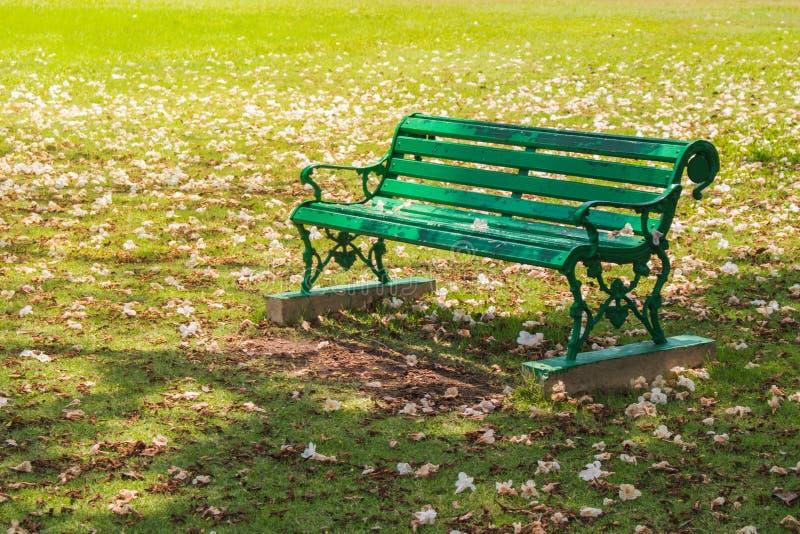 Posto verde del banco del metallo sul campo verde del prato dell'erba del prato inglese circondato con la caduta rosa secca del f fotografie stock libere da diritti