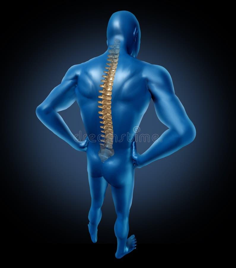 Postura traseira da espinha do ser humano ilustração royalty free