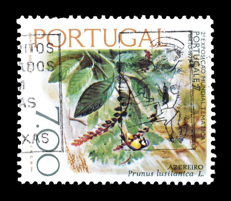 Postzegel door Portugal wordt gedrukt dat stock foto's
