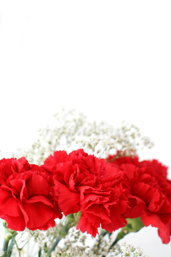 Download Posy stock image. Image of water, macro, nice, carnations - 3288351