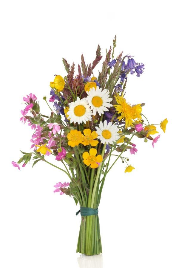 Posy del Wildflower fotografia stock libera da diritti