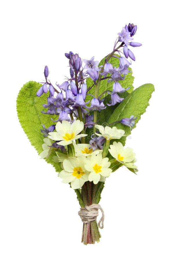 Download Posy of flowers stock image. Image of primrose, posy - 24291165