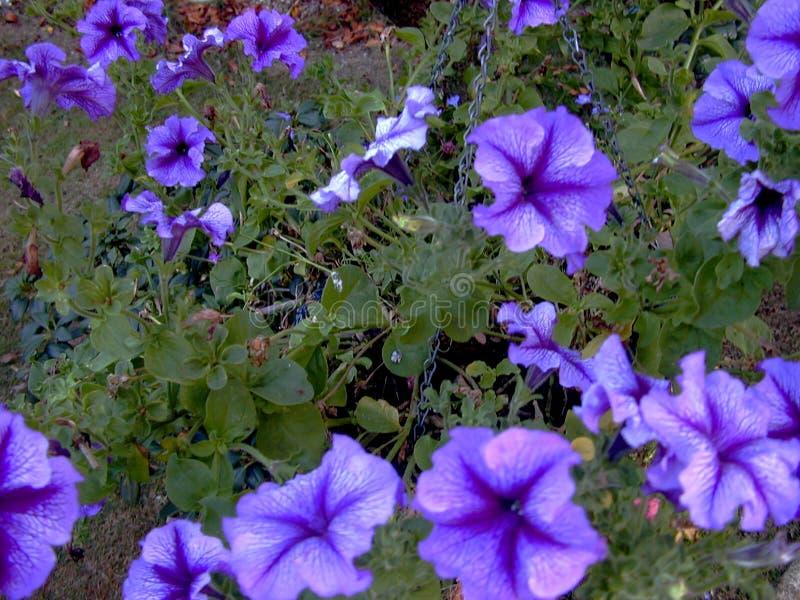 Potência De Flor Fotos de Stock