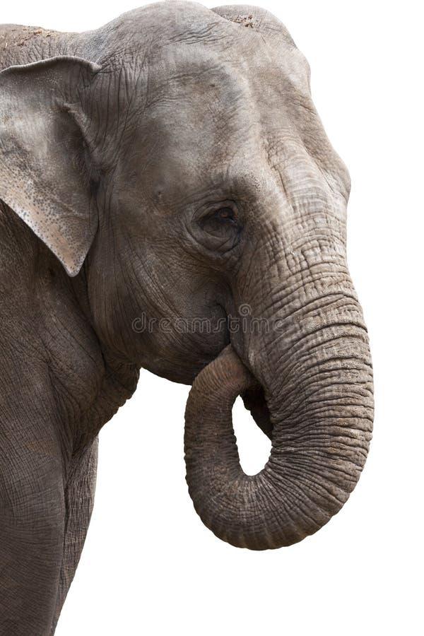 Potência do elefante fotografia de stock