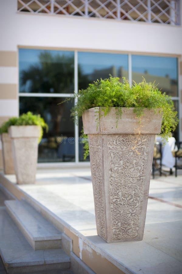 Pot avec une usine à l'entrée à un hôtel luxueux image libre de droits