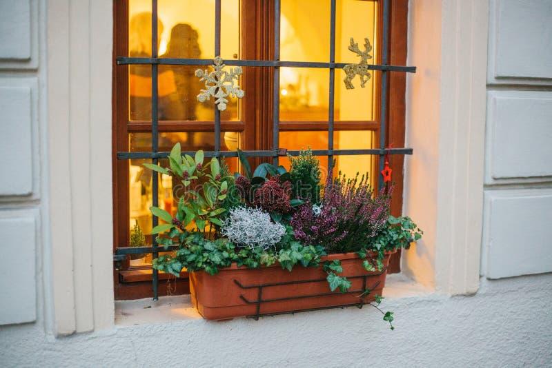 Pot de belles usines en dehors de la fenêtre de maison, décoré des attributs de Noël - flocons de neige, étoiles et cerfs communs image libre de droits