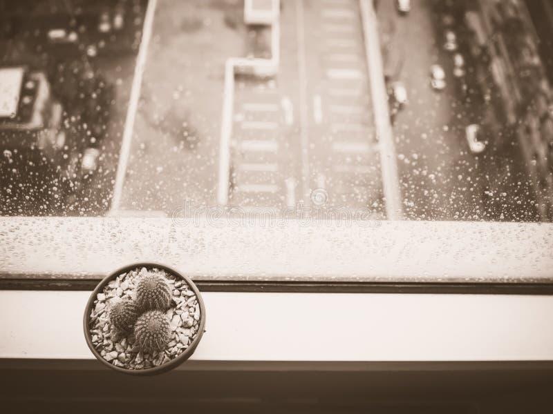 Pot de cactus sur la fenêtre images libres de droits