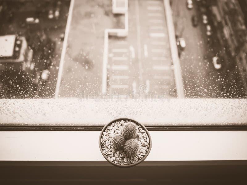 Pot de cactus sur la fenêtre image stock