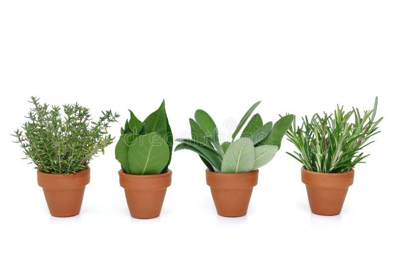 Pot de diverses herbes photographie stock libre de droits