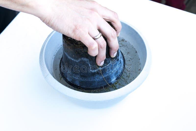 Pot de fleur à l'envers dans un plat complètement de l'eau images libres de droits