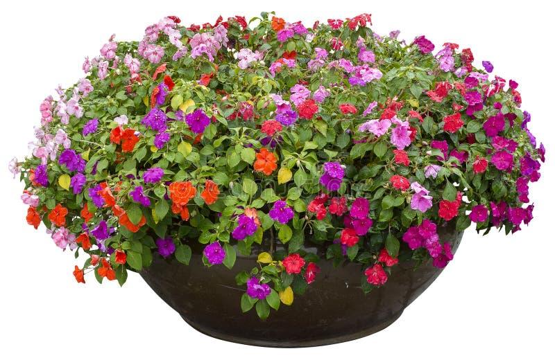 Pot de fleur dans le jour pluvieux photographie stock