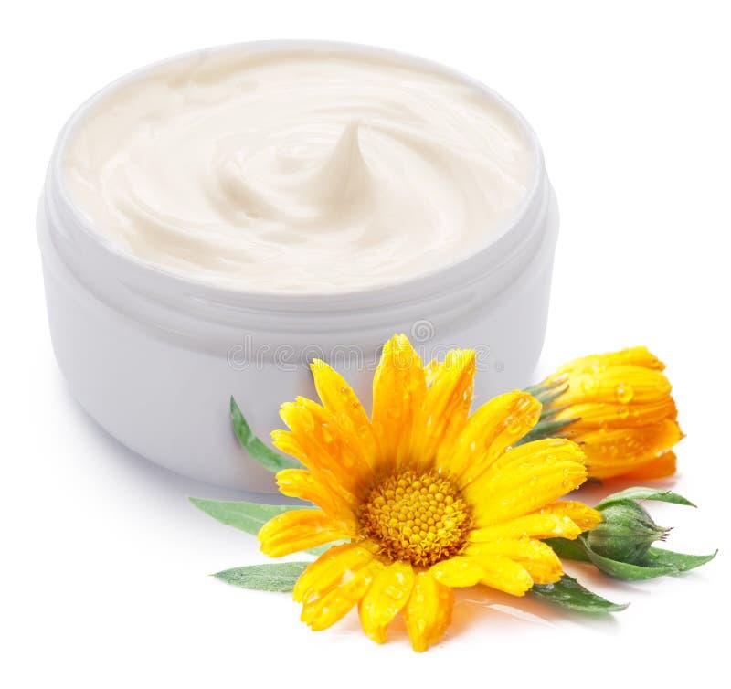 Pot de fleur de crème et de calendula. images stock
