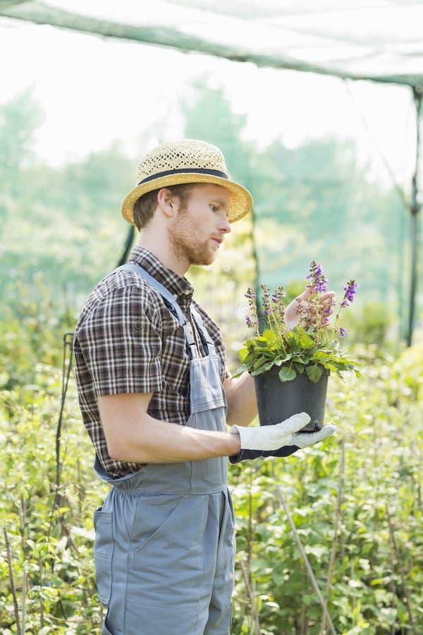 Pot de fleur de examen de jardinier à la serre chaude photos libres de droits
