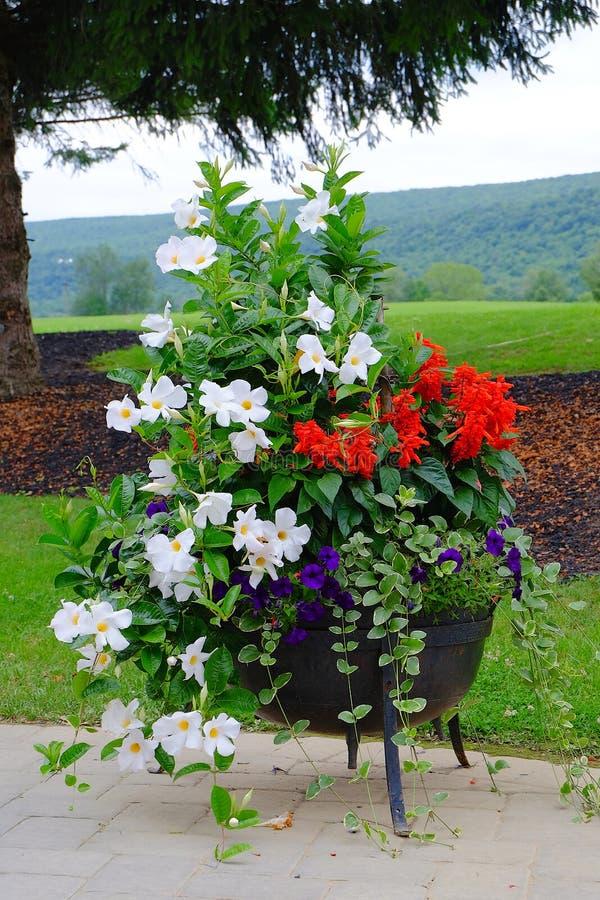 Pot de fleur sur le patio photo stock