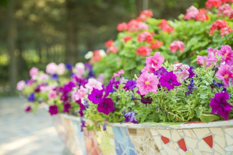 Pot de fleurs en céramique avec les fleurs brillamment fleurissantes Belles fleurs image libre de droits