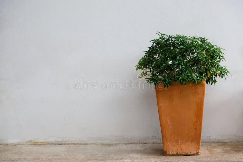 Pot de fleurs près de mur sale photos stock