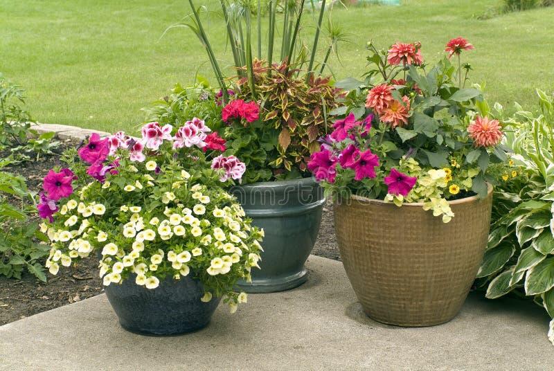 POT di fiore con i fiori di fioritura immagini stock
