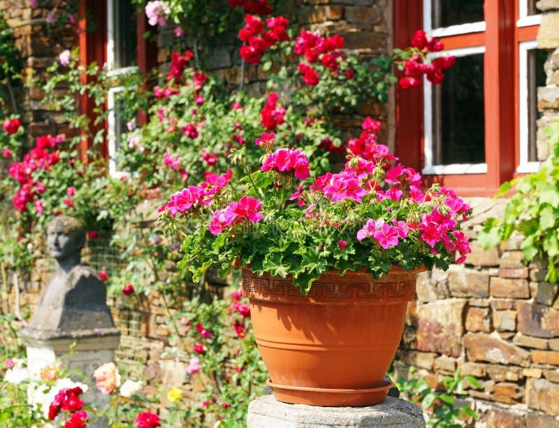 POT di fiore in giardino pieno di sole fotografia stock libera da diritti