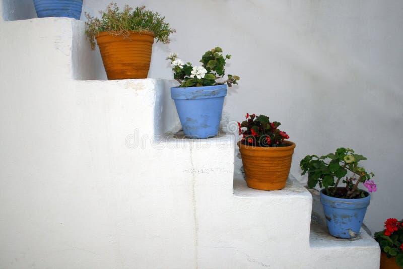 POT di fiore - Paros, Grecia fotografie stock