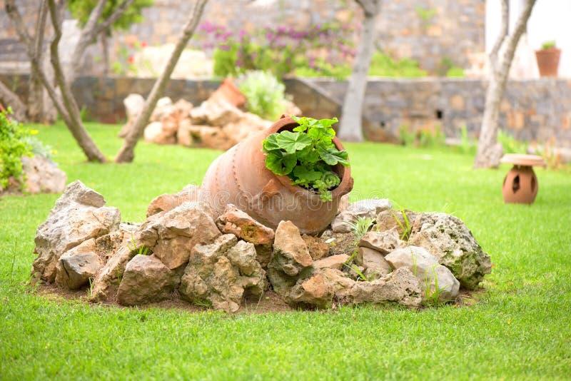 Pot en céramique avec l'usine de géranium comme décoration dans un jardin grec photo libre de droits