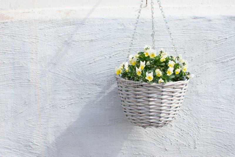 Pot en osier avec la fleur jaune photos libres de droits