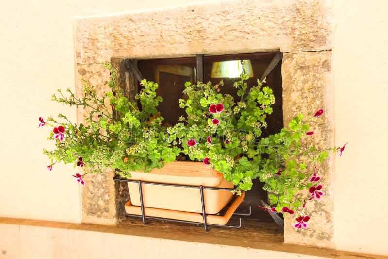 Pot of flowers in a niche walls of the house. Pot with pink flowers in a niche walls of the house stock photography