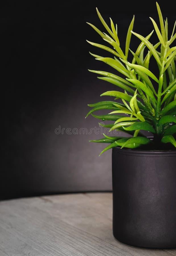 Pot frais d'arbre sur le fond en bois de panneau Plante d'int?rieur pour des d?corations photos libres de droits