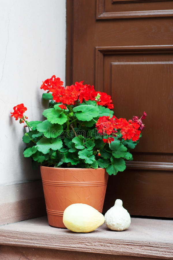 Pot with geranium flowers. Old door and pot with red geranium flowers royalty free stock image