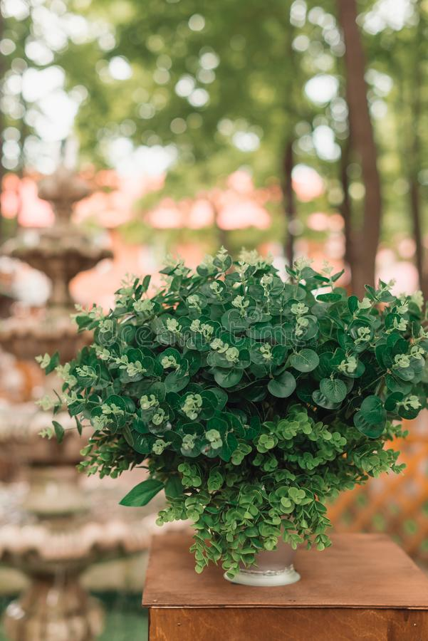 Pot with a green bush standing on a shelf. Against the background of a fountain in a restaurant royalty free stock photography