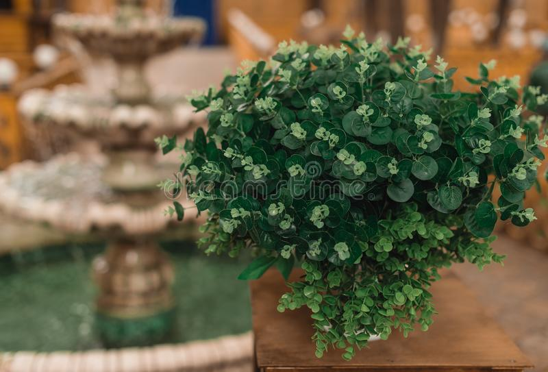 Pot with a green bush standing on a shelf. Against the background of a fountain stock image