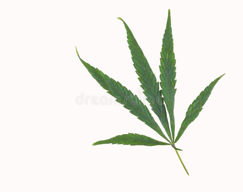 Pot Leaf on White. Simple marijuana pot leaf isolated on a white background stock photos