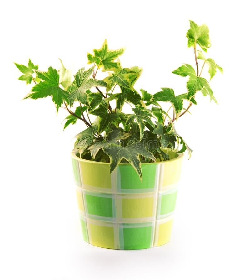 Pot met een bloem royalty-vrije stock foto